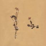 ξηρός τρύγος εγγράφου φυλλώματος λουλουδιών Στοκ Φωτογραφία