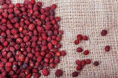 Ξηρός - φρούτα και μούρα στο υπόβαθρο απόλυσης Στοκ Εικόνα