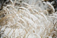 ξηρός χειμώνας χλόης Στοκ φωτογραφία με δικαίωμα ελεύθερης χρήσης