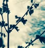 ξηρός Στοκ φωτογραφία με δικαίωμα ελεύθερης χρήσης