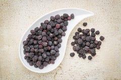 Ξηρός chokeberry (aronia) Στοκ εικόνα με δικαίωμα ελεύθερης χρήσης
