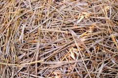 ξηρό άχυρο Στοκ φωτογραφία με δικαίωμα ελεύθερης χρήσης