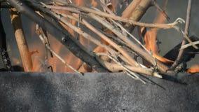 Ξηρό έγκαυμα κλάδων στην πυρκαγιά απόθεμα βίντεο