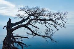 Ξηρό δέντρο με το μπλε ουρανό Στοκ Εικόνες