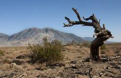 Ξηρό δέντρο στην έρημο, βουνά στο υπόβαθρο αμερικανική κοιλάδα θανάτου Καλιφόρνιας Στοκ Φωτογραφία