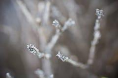 Ξηρό δέντρο στη φύση Στοκ Φωτογραφίες