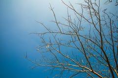 Ξηρό δέντρο. Στοκ Φωτογραφίες