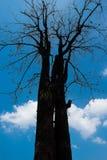 ξηρό δέντρο Στοκ φωτογραφία με δικαίωμα ελεύθερης χρήσης