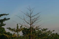 ξηρό δέντρο Στοκ εικόνες με δικαίωμα ελεύθερης χρήσης