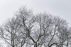 ξηρό δέντρο στοκ φωτογραφίες
