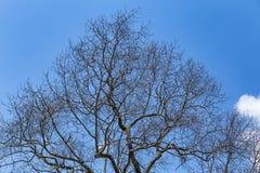 ξηρό δέντρο στοκ εικόνες