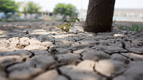 ξηρό έδαφος Στοκ Φωτογραφία