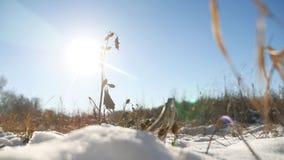 Ξηρό αγκάθι στο τοπίο φύσης χειμερινής ξηρό χλόης χιονιού φιλμ μικρού μήκους