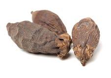 Ξηρό ακατέργαστο betel ή areca καρύδι Στοκ Εικόνα