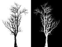 Ξηρό απομονωμένο δέντρο διάνυσμα Στοκ Φωτογραφίες