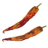 ξηρό απομονωμένο πιπέρι τσίλι Ξηρό λαχανικό πιπέρια ομάδας Στοκ Εικόνες