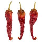ξηρό απομονωμένο πιπέρι τσίλι Ξηρό λαχανικό πιπέρια ομάδας Στοκ εικόνα με δικαίωμα ελεύθερης χρήσης