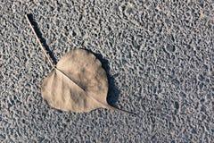 Ξηρό αριστερό στο έδαφος Στοκ Εικόνες