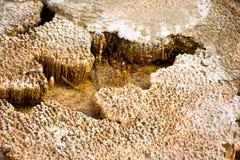 Ξηρό βακτηριακό χαλί Στοκ Φωτογραφία