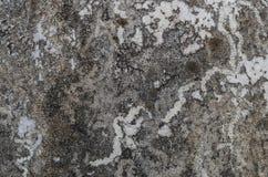 ξηρό βρύο Στοκ Φωτογραφία