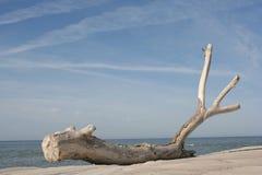ξηρό δέντρο επάνω Στοκ Εικόνες
