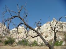 Ξηρό δέντρο με πίσω από τους άσπρους βράχους του Cappadocia στην Τουρκία στοκ εικόνες