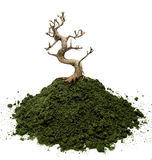 ξηρό δέντρο μπονσάι Στοκ Φωτογραφίες