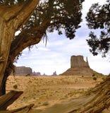 Ξηρό δέντρο στην κοιλάδα μνημείων στοκ εικόνες