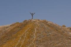 Ξηρό δέντρο στο λόφο στοκ φωτογραφία