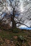 Ξηρό δέντρο 2 στοκ εικόνα