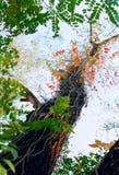 ξηρό δέντρο Στοκ φωτογραφίες με δικαίωμα ελεύθερης χρήσης