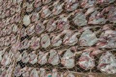Ξηρό καλαμάρι Στοκ εικόνες με δικαίωμα ελεύθερης χρήσης