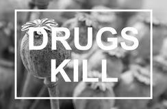 Ξηρό κεφάλι παπαρουνών Θανάτωση εγκαταστάσεων φαρμάκων οπίου Στοκ φωτογραφία με δικαίωμα ελεύθερης χρήσης