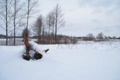 Ξηρό κρανίο αγελάδων στο χιόνι, Στοκ Εικόνες