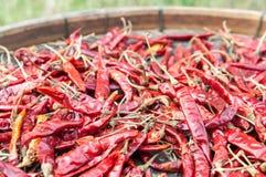 Ξηρό κόκκινο πιπέρι στοκ εικόνες με δικαίωμα ελεύθερης χρήσης