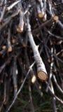 Ξηρό λεπτό ξύλο για τη θέρμανση στοκ φωτογραφίες με δικαίωμα ελεύθερης χρήσης