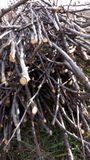 Ξηρό λεπτό ξύλο για τη θέρμανση στοκ εικόνα