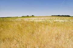 ξηρό λιβάδι στοκ εικόνες