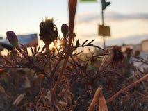 Ξηρό λουλούδι στα sunlights στοκ εικόνα
