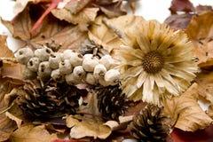 Ξηρό λουλούδι με τον κώνο πεύκων Στοκ Φωτογραφία