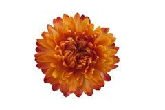 ξηρό λουλούδι Στοκ φωτογραφίες με δικαίωμα ελεύθερης χρήσης