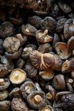 Ξηρό μανιτάρι shiitake στην ταϊλανδική αγορά Στοκ εικόνα με δικαίωμα ελεύθερης χρήσης