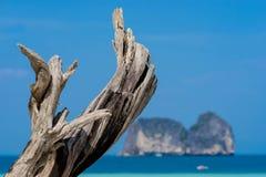 Ξηρό ξύλο στην παραλία Στοκ φωτογραφίες με δικαίωμα ελεύθερης χρήσης