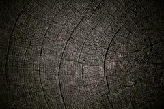 Ξηρό ξύλο Στοκ Εικόνα