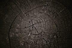 Ξηρό ξύλο Στοκ φωτογραφία με δικαίωμα ελεύθερης χρήσης