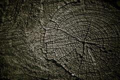 Ξηρό ξύλο Στοκ Φωτογραφία