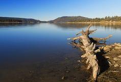 Ξηρό ξύλο Στοκ Εικόνες