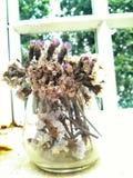 Ξηρό λουλούδι στο γυαλί στοκ φωτογραφίες με δικαίωμα ελεύθερης χρήσης