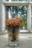 Ξηρό λουλούδι στο γυαλί στοκ εικόνα