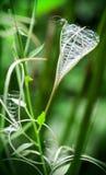 Ξηρό λουλούδι Fireweed Στοκ εικόνα με δικαίωμα ελεύθερης χρήσης
